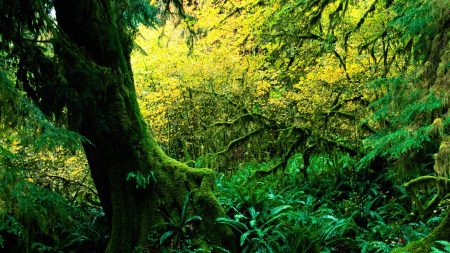tree, moss, jungle