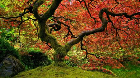 tree, moss, krone