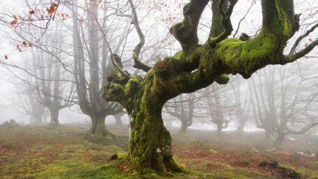 tree, moss, trunk