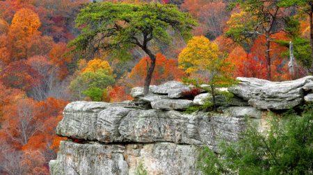 tree, plates, autumn