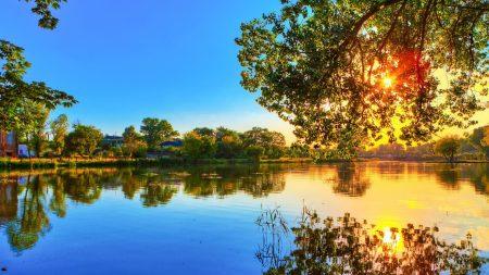 tree, river, krone