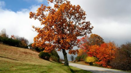 tree, road, bushes