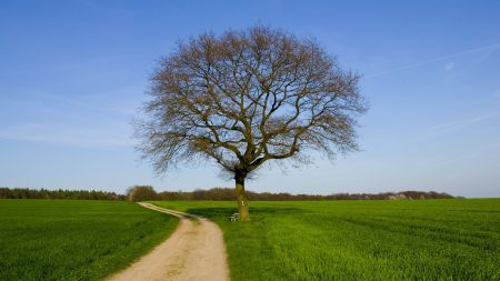 tree, road, field