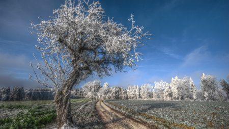tree, road, hoarfrost
