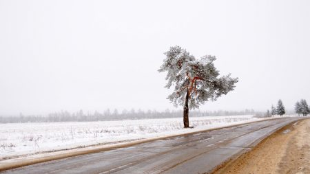tree, road, lonely