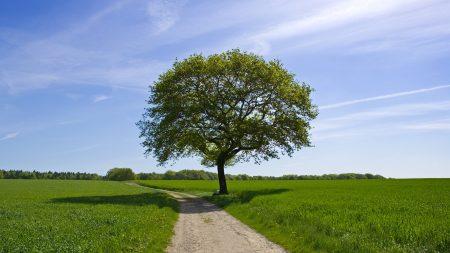 tree, road, shade