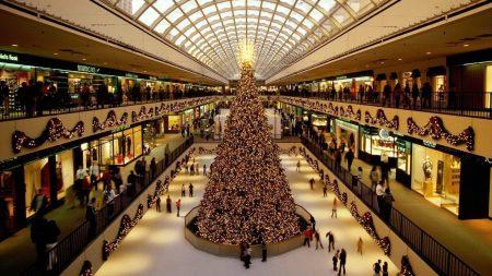 tree, shopping center, hall