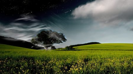 tree, sky, clouds