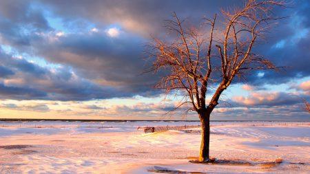 tree, snow, fence