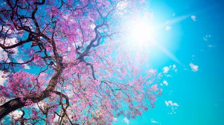 tree, sun, blue