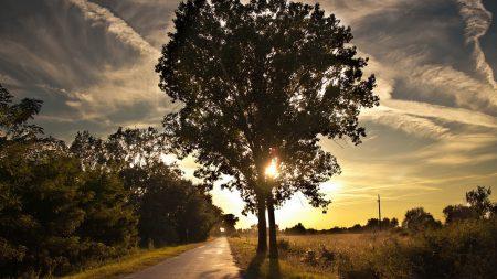 tree, trail, walk