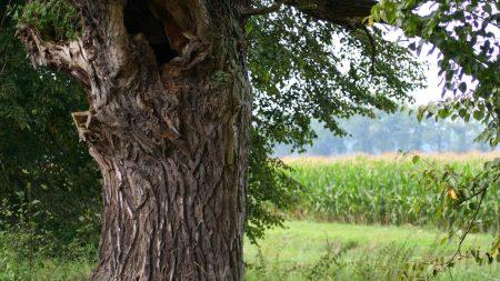 tree, trunk, hollow