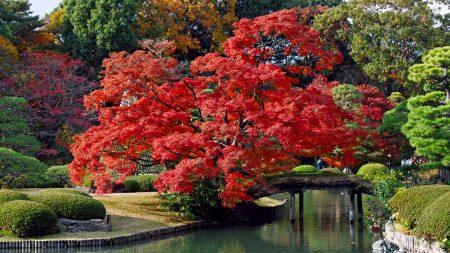 trees, autumn, beautiful