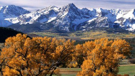 trees, autumn, crones