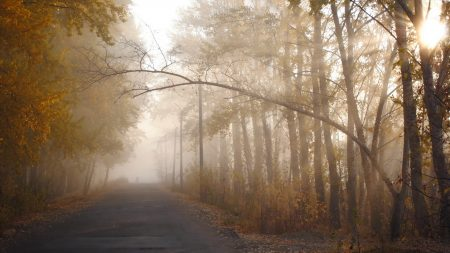 trees, autumn, haze