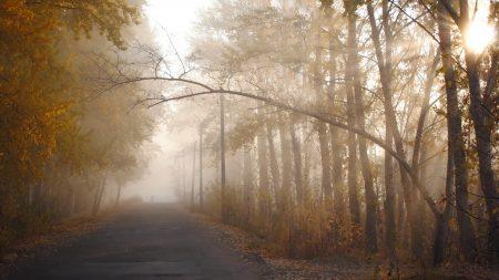trees, autumn, haze