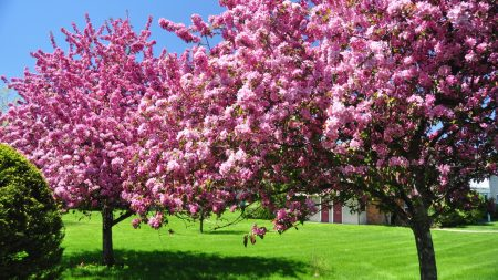 trees, blossoming, spring