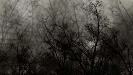 trees, branches, dark