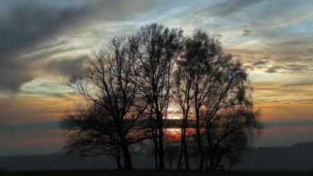 trees, evening, decline