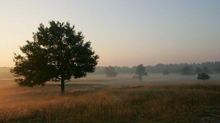 trees, field, fog