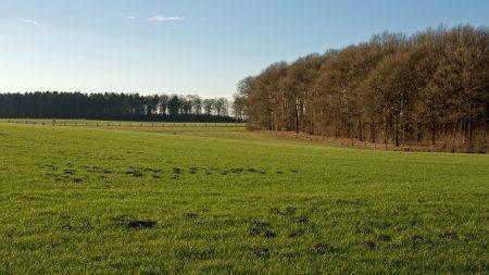 trees, field, greens