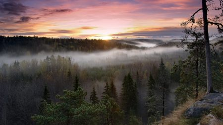 trees, fog, view from above