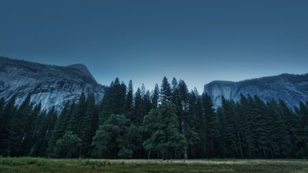 trees, forest, mountains