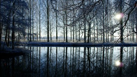 trees, forest, reflection