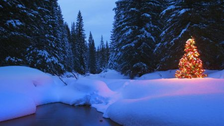 trees, forest, snow