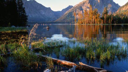 trees, fragments, lake
