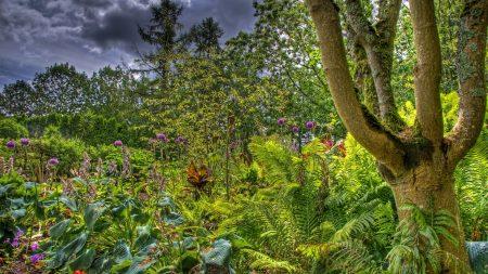 trees, garden, bushes