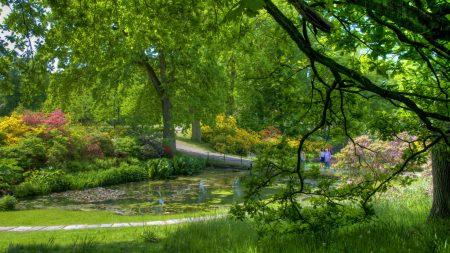 trees, garden, pond