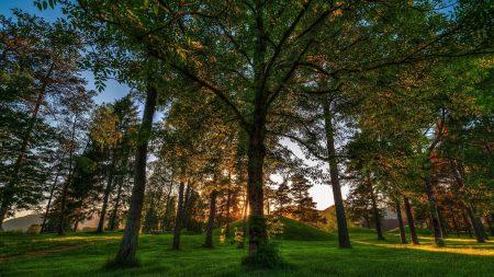 trees, grass, light