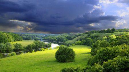 trees, grass, sky