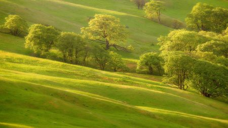 trees, grass, slope