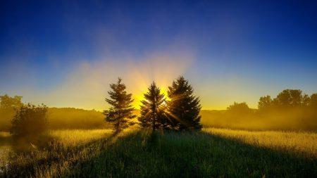 trees, grass, sunset