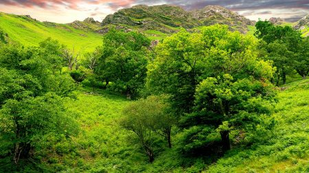 trees, green, brightly