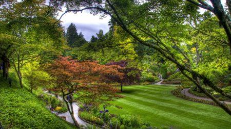 trees, green, lawn