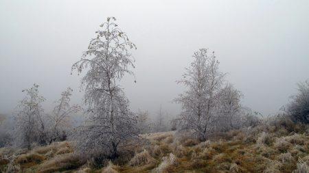 trees, hoarfrost, grass