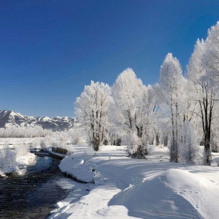trees, hoarfrost, winter