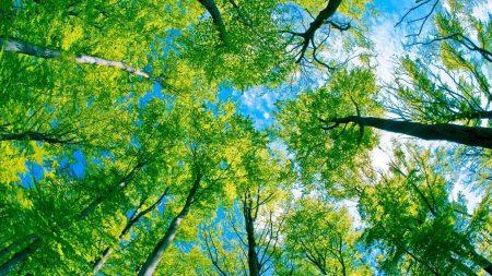 trees, kroner, from below