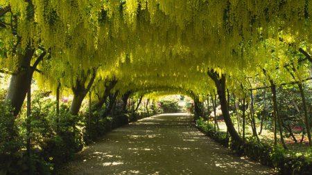 trees, kroner, leaves