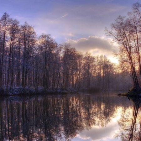 trees, lake, reflection