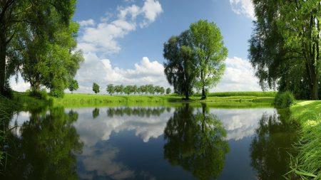 trees, lake, summer