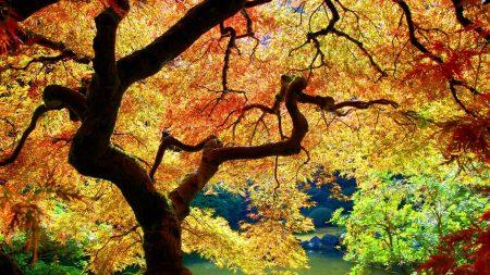 trees, leaves, autumn