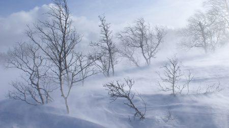 trees, mountains, blizzard