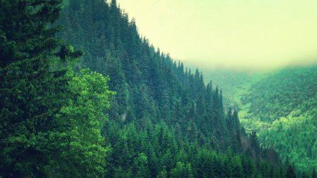 trees, mountains, sky