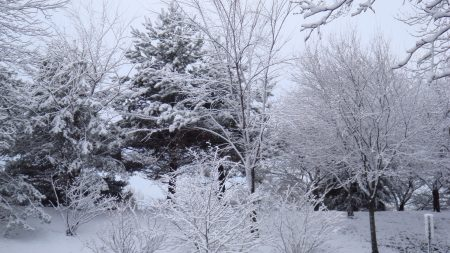 trees, naked, winter