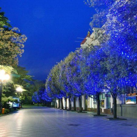 trees, nature, city