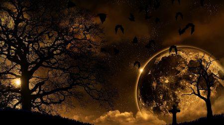 trees, nature, night